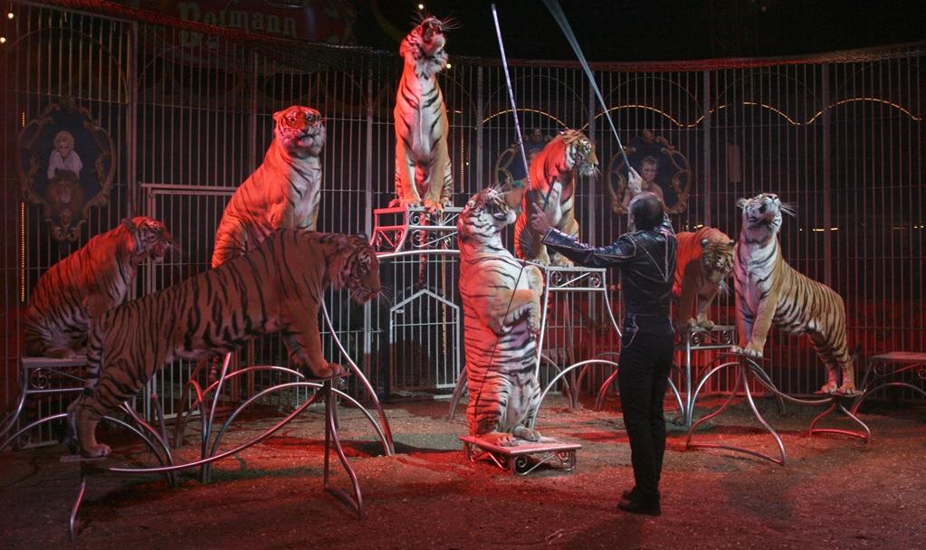 Cirque Bormann-Moreno - Paris 15