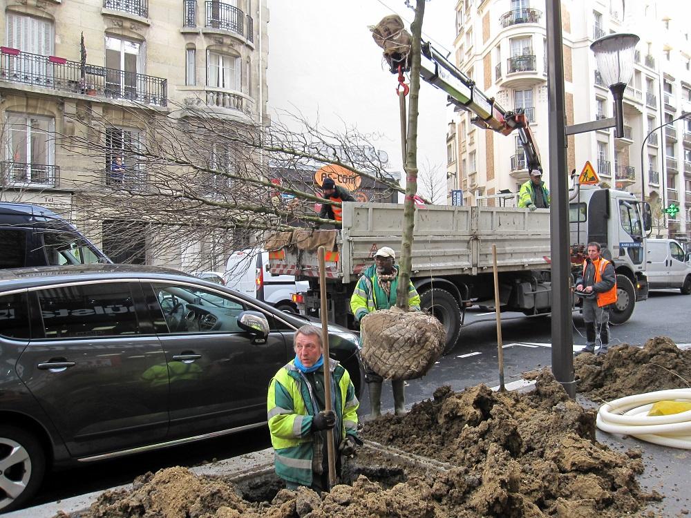 plantation arbres - avenue Emile Zola - DEVE - mairie paris 15