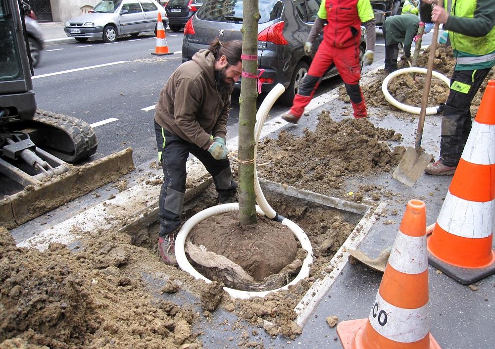 plantation arbres avenue Emile Zola - tuyau arrosage - DEVE mairie paris 15