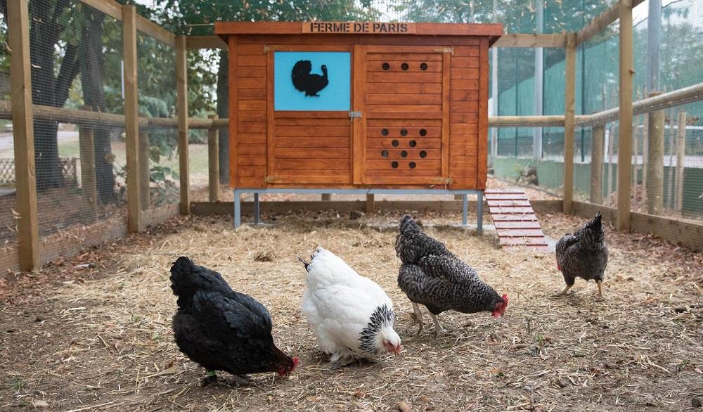 Un après-midi à la ferme @ Ferme urbaine pédagogique Suzanne Lenglen